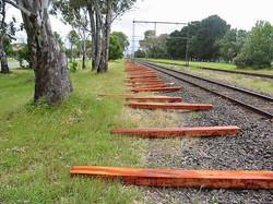 Eucalyptus Camaldulensis -  River Red Gum - Sleepers