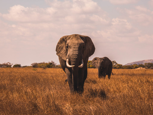 Pricing - The Elephant in the Room