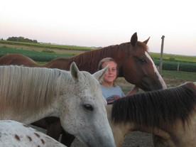 Groundwork: Learning to Speak Horse