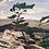 Thumbnail: White Pine