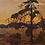 Thumbnail: The Jack Pine