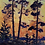 Thumbnail: Pine Trees at Sunset