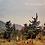 Thumbnail: Woodland Combermere