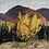 Thumbnail: Autumn on the Madawaska