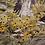 Thumbnail: Black Eyed Susans