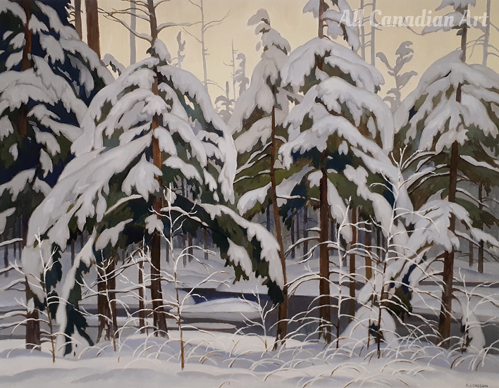 Snow Laden Spruce