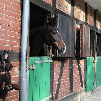 Eirin Losvik horse Daffodils Flamenco