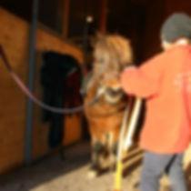Eirin Losvik horse Korholan Kamomilla