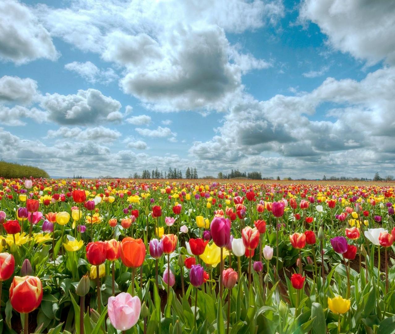 Holanda - Jardim de flores