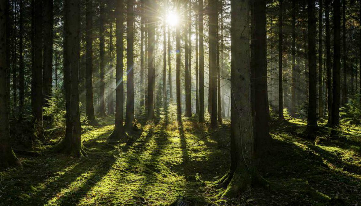 Alemanha - Floresta negra