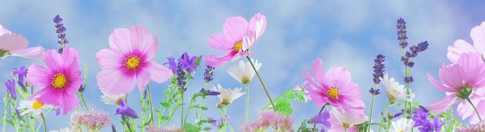 06 - wild-flowers-571940_1920.jpg
