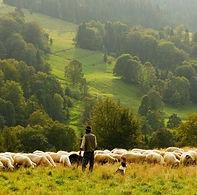 10 - sheep-690198_1920-960x539.jpg