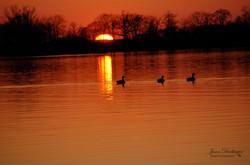 Ducks.wm