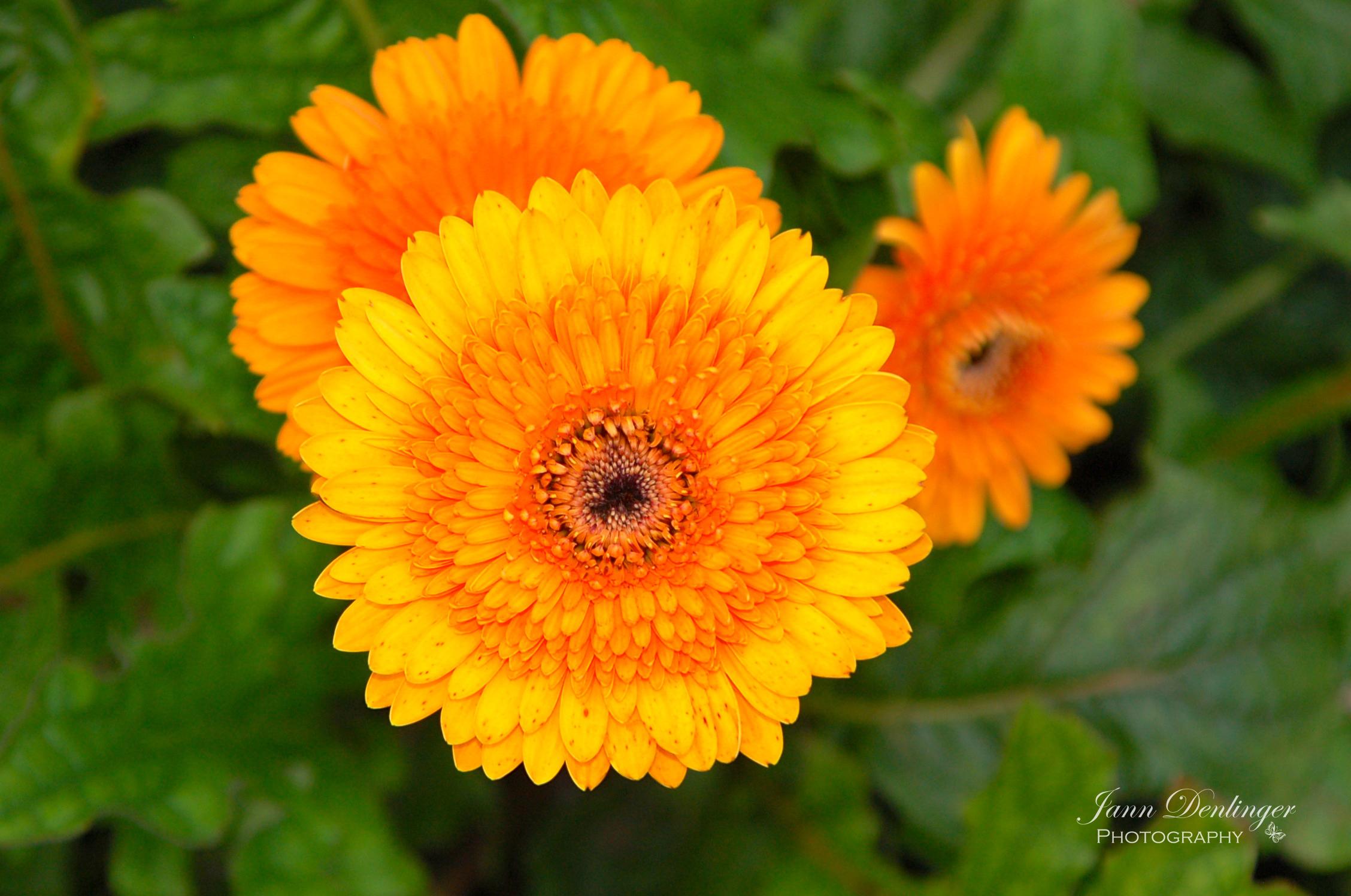 Orange.wm