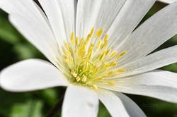 Jann Denlinger Photography 2020 - flower