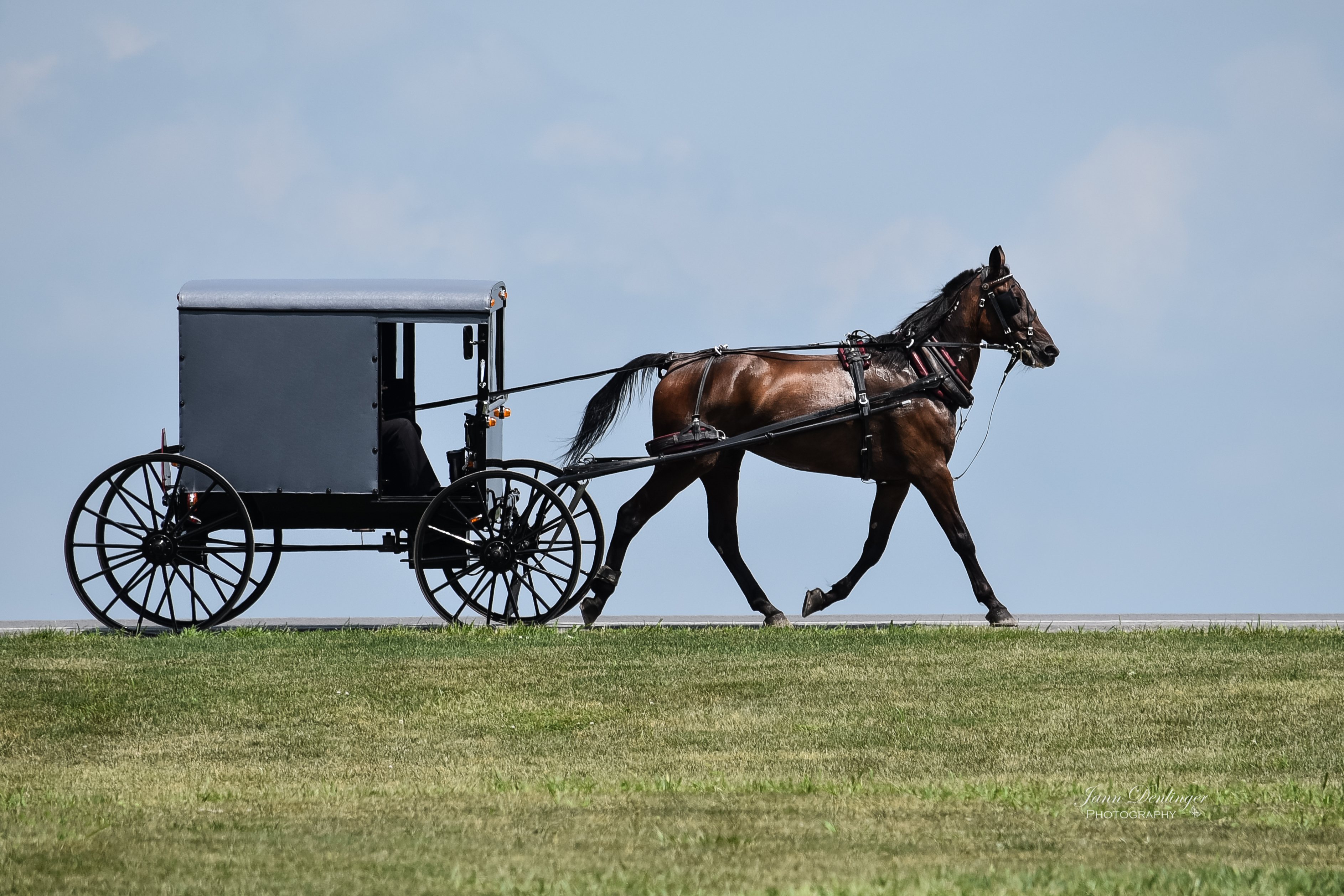 Amish Buggy Lancaster County