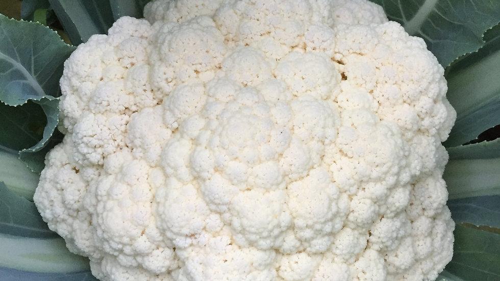 "Cauliflower ""Amazing"", 6-pack Plants"