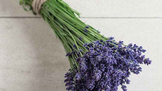 "Lavender, 4"" Potted Plant"