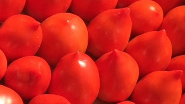 """Roma/Paste Tomatoes, 4.5""""/Gallon Potted Plants"""