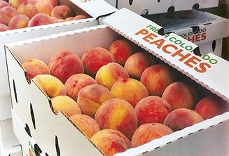 peach postcard pic.jpg