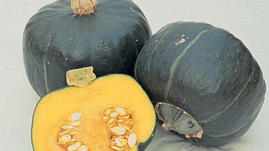 """Winter Squash, 3"""" Potted Plant"""