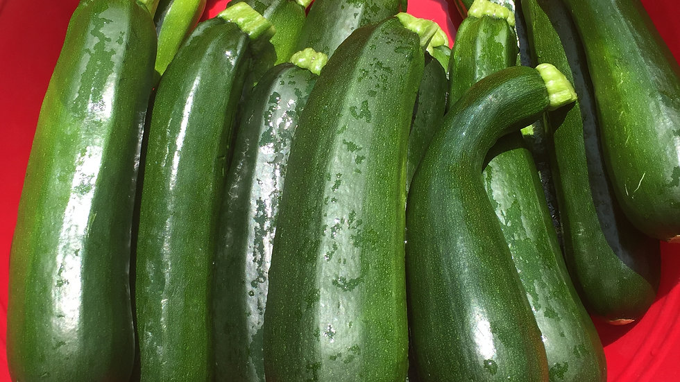 """Zucchini - 3"""" Potted Plant"""