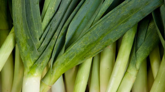 Leeks, 6-pack Plants