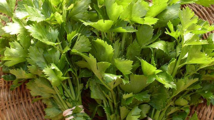 """Cutting Celery, 4"""" Potted Plant"""