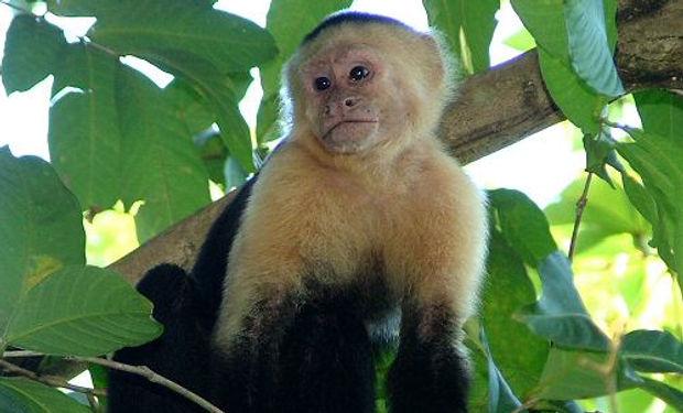 Monkeys3.jpg