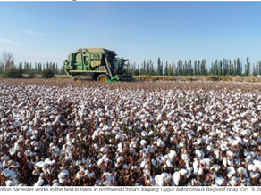 BCI's 'Continued Silence' on Xinjiang Hurts All Brands Using 'Better' Cotton