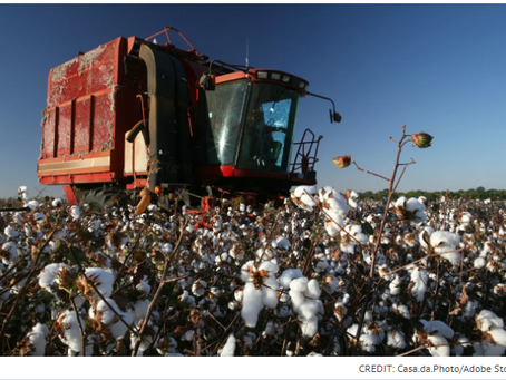 Cotton Prices Are Surging. What Does This Mean for Fashion?