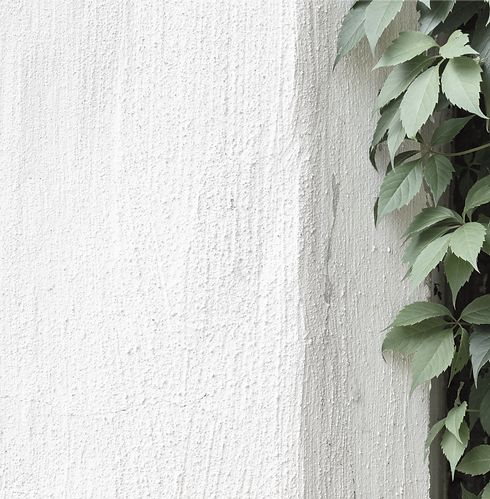 Green%2520Ivy%2520on%2520Stone%2520Wall_