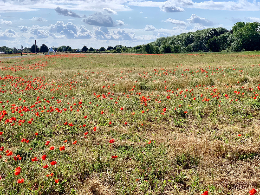 Poppies at Ver-sur-Mer