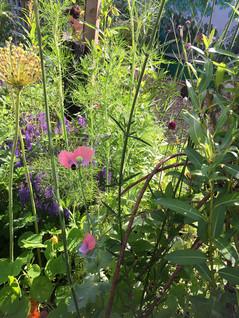 Garden July 2016lowres.jpg
