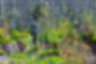 lavender Marianne Majerus.jpg