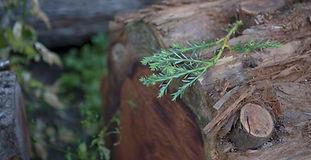 fsc_imagery_hyla-woods_05.jpg