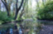 fsc_imagery_hyla-woods_11.jpg