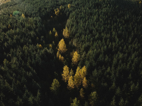 FSC Issues RFP for Forest Carbon Research in North America