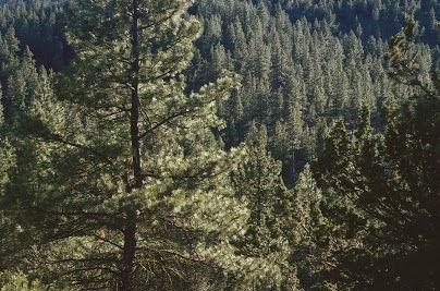 Forest-whyfsc.jpg
