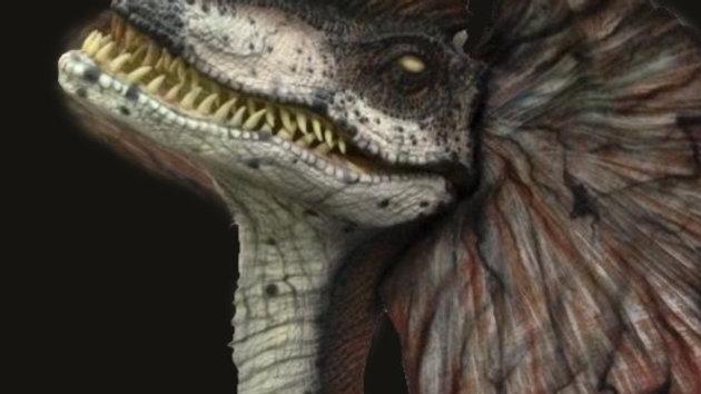 Dilophosauraus-Spitter-static display