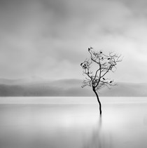 George Digalakis - Winter Birds, Greece