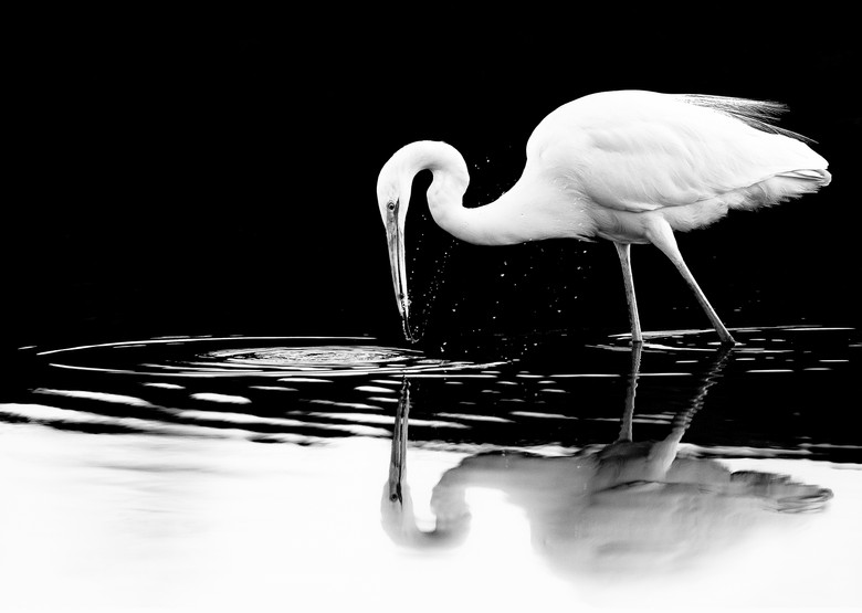 Anjitha Senarath -  Egret's Catch, UAE.j