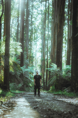 Redwood-1.jpg