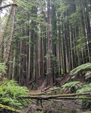 Redwood 4-1-2.jpg