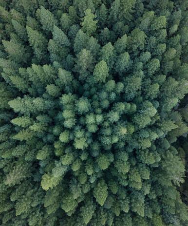 Green Nature-1-2.JPG