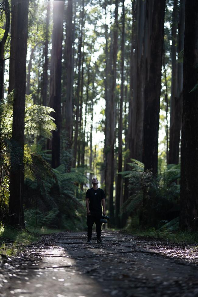Redwood-1-2.jpg