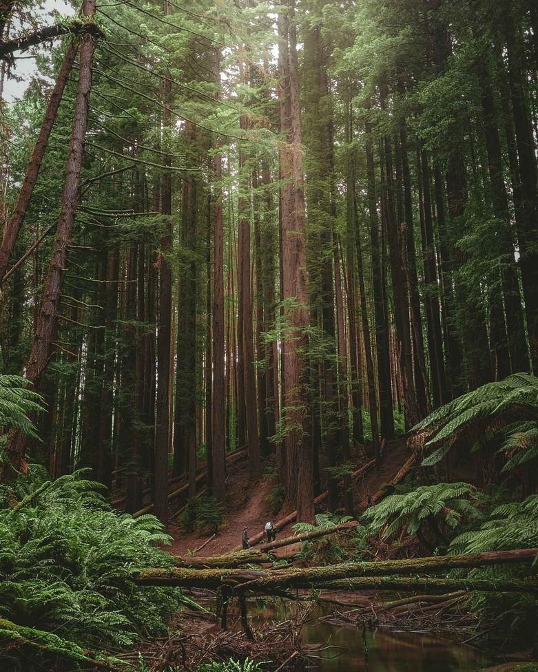 Redwood 4-1.jpg