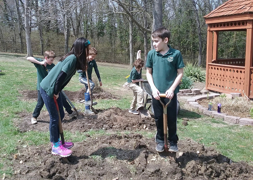 Elementary students dig up garden beds.