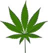 Dr Chelson is able to make medical marijuana evaluations in Tucson, Arizona