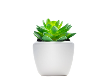 succulant_edited.png